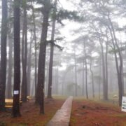 Featured Image weather in Baguio June 3, 2021